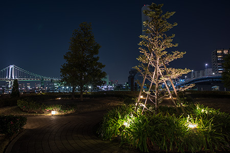 ベイブリーズガーデンの夜景