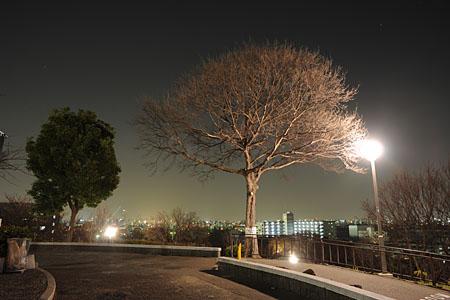 千島公園 昭和山の夜景