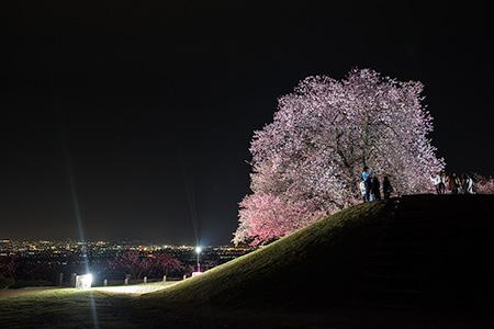 八代ふるさと公園の夜景