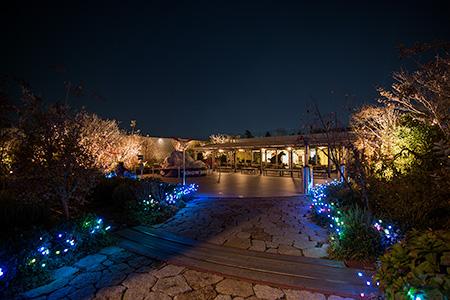 JR博多シティ つばめの杜ひろばの夜景