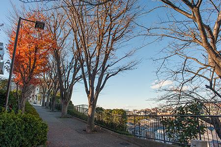 菊名三丁目公園の夜景