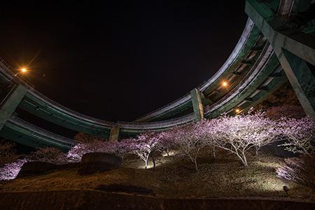 河津七滝ループ橋の夜景