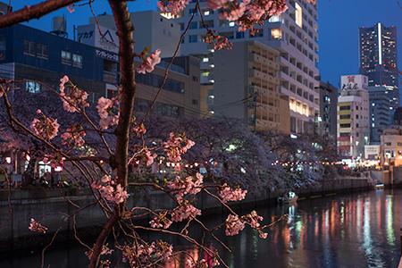 大岡川プロムナードの夜景