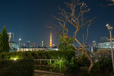 六本木ヒルズ ローズガーデンの夜景