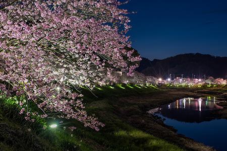 みなみの桜と菜の花まつりの夜景